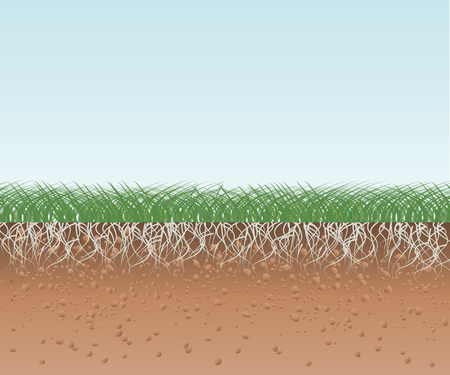 muck: Grass with Roots and Soil