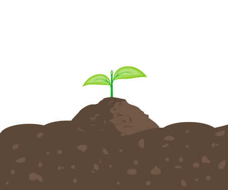 Sprout in the Ground Illustration