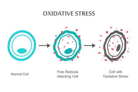 Oxidatieve stressdiagram. Vector illustratie plat ontwerp
