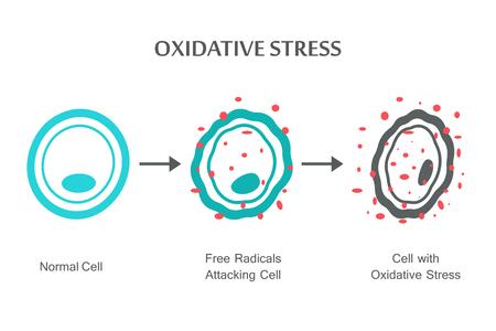 Oxidative Stress Diagram. Vector illustration flat design