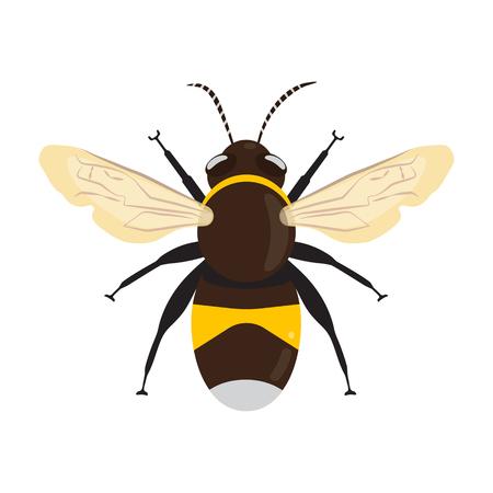 Honey Bee Icon. Vecteurs