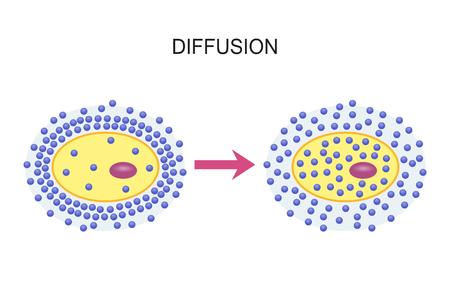 細胞膜を介した拡散