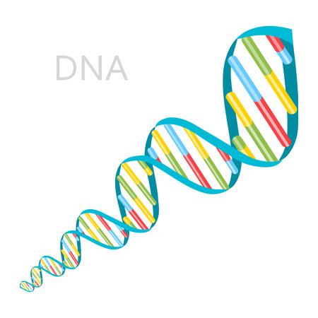 DNA strands icon. Vector illustration flat design. Vettoriali