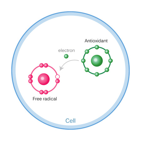 How Antioxidants Work On Free Radicals Damage. Vector illustration 일러스트