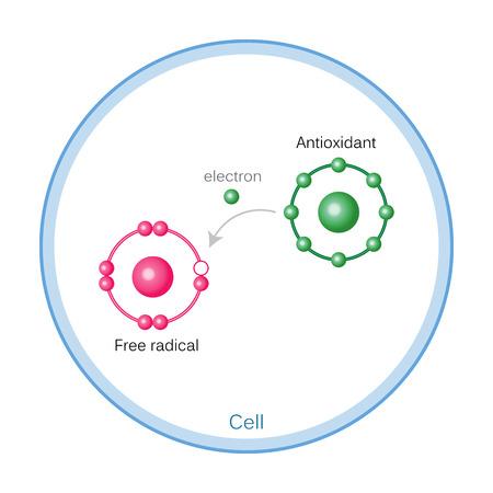 Comment les antioxydants fonctionnent sur les dommages de radicaux libres. Illustration vectorielle