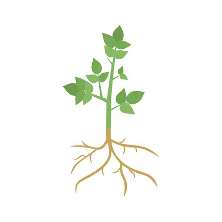 Green Plant Sprout with Roots Ilustração Vetorial