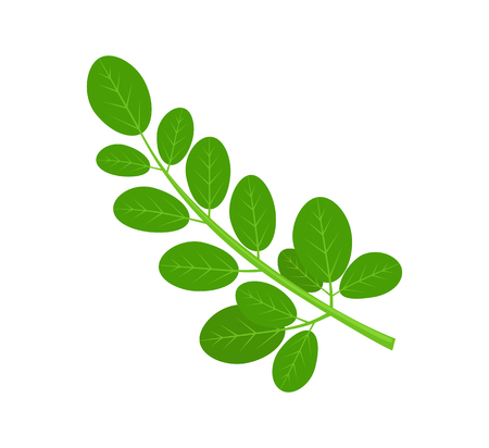 Moringa Green Plant and Leaves Illustration