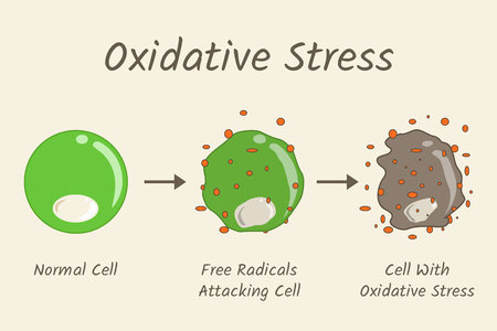 Oxidative Stress Diagram. Free radicals attacking cell. Vector illustration flat design