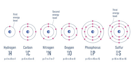 Structure of an atom. Hydrogen. Carbon. Nitrogen. Oxigen. Phosphorus. Sulfur Atomic Model diagram Vector illustration