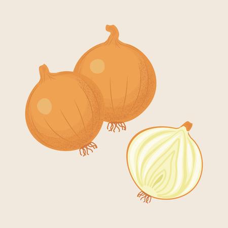 Yellow onions and half onion isolated. Vector illustration Illustration