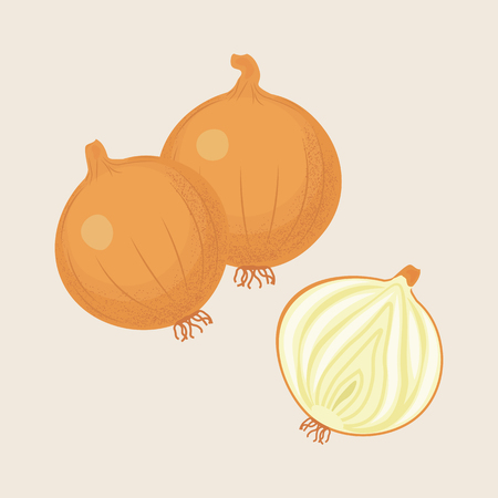 Yellow onions and half onion isolated. Vector illustration Ilustração