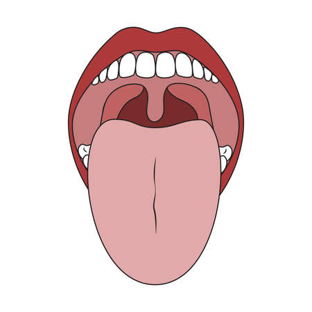 Human Mouth and Tongue. Oral Cavity Isolated