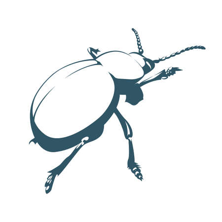 Vector drawn beetle. Isolated on white background.