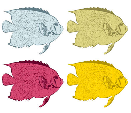fish isolated on white background.