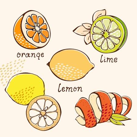 lima limon: Citrus conjunto de naranja, lim�n, lima, pomelo en el estilo de dibujos animados Vectores