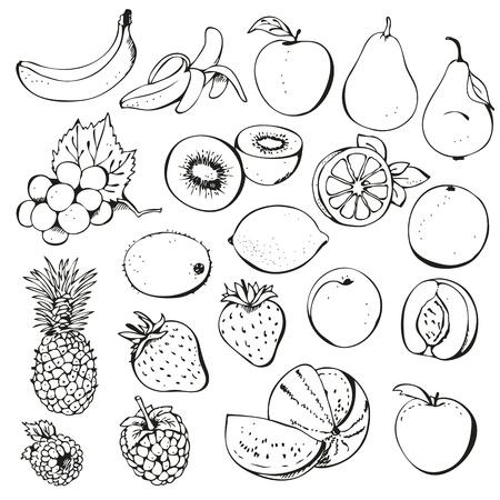 outline drawing: Frutti di bosco, set, isolato su uno sfondo bianco Vettoriali