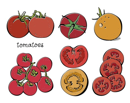 Collectoin of tomatoes and slices on a white background