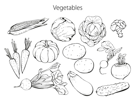 Set of vegetables isolated on a white background Illustration
