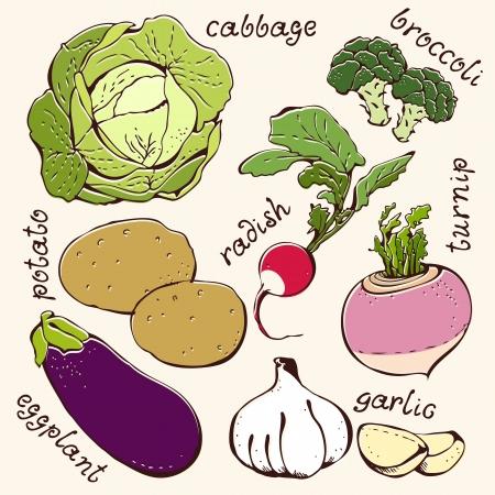 rzepa: Zestaw kapusty warzyw, ziemniaki, brokuły, rzodkiewki, rzepa, bakłażanem, czosnkiem Ilustracja