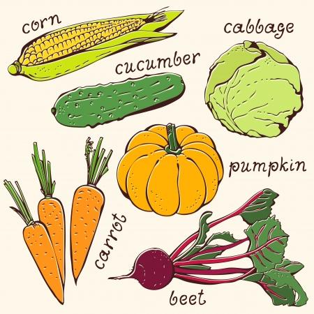 Set of vegetables food ingredients on a beige background Illustration