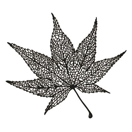 Maple leaf drawing Illustration