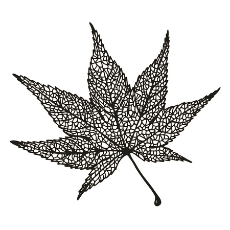 Maple leaf drawing Illustration