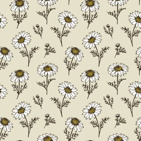 chamomile tea: Chamomile flowers, vector pattern from hand drawn camomiles