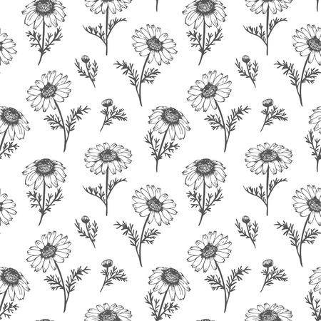 Chamomile pattern, vector seamless background with hand drawn flowers Ilustração