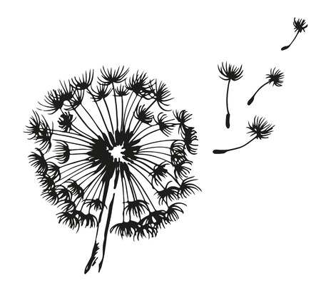 Dandelion blowing hand drawn vector illustration, isolated on white background