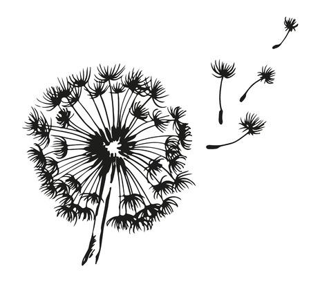 blancos: ejemplo del vector dibujado diente de león soplado mano, aislados en fondo blanco
