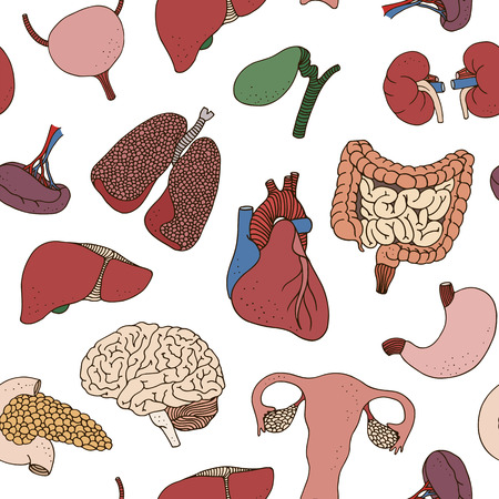 Seamless color human organs pattern, vector anatomy background Illustration
