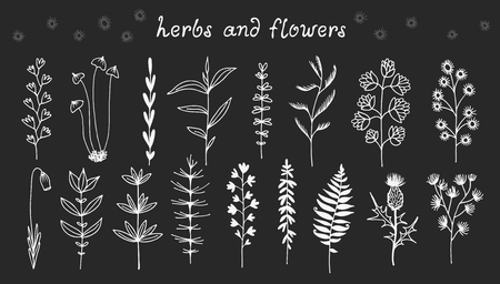 Botanical doodle illustration, vector set with drawn leaves, herbs and flowers, floral collection isolated on black background