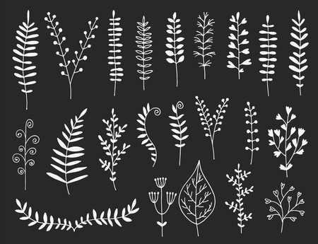 Hand drawn leaves, herbs and branches vector set, botanical collection on black background Illustration