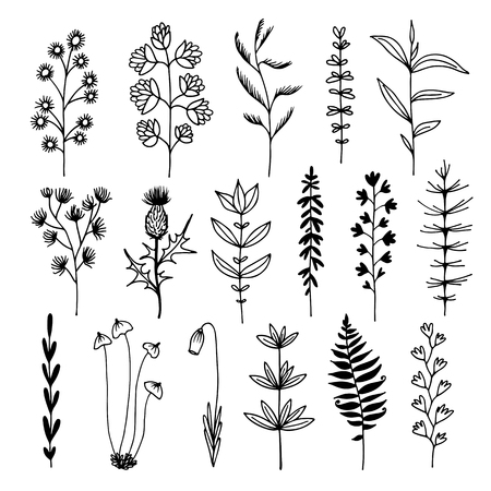 Botanical doodle illustration, vector set with drawn leaves, herbs and flowers, floral collection isolated on white background