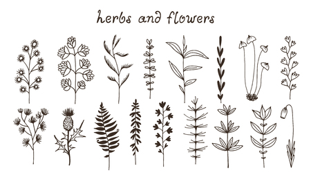 Botanical doodle illustration, vector set with drawn leaves, herbs and flowers, floral collection isolated on white background with text Illustration