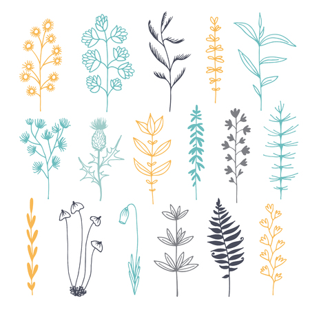 Botanical doodle color illustration, vector set with drawn leaves, herbs and flowers, floral collection isolated on white background Illustration