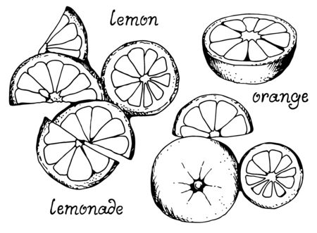 Lemonade vector set, collection of lemons and oranges isolated on white background