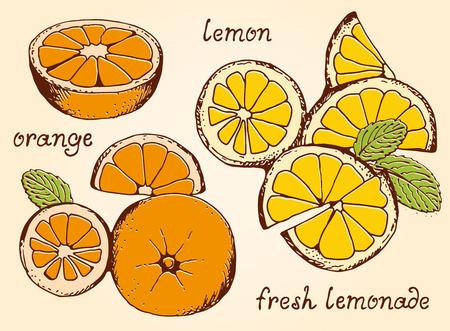 Lemonade ingredients vector set, summer lemons and oranges set