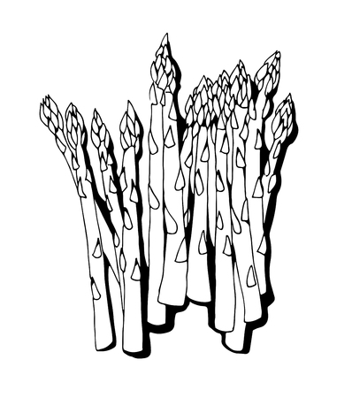 Asparagus vector isolated on white background Ilustracje wektorowe