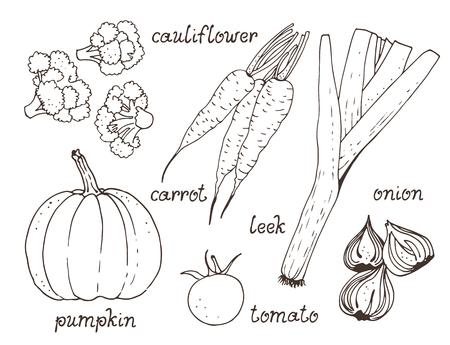 Ensemble de vecteurs végétaux, collection dessinée à la main : citrouille, tomate, carotte, oignon, chou-fleur, poireau avec texte