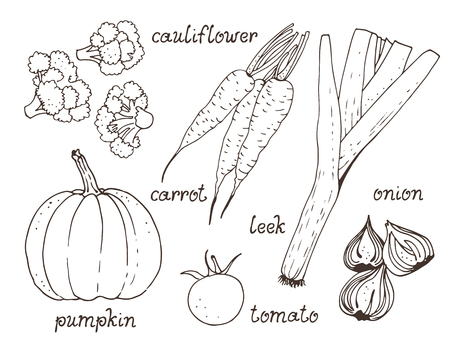 Vegetable vector set, hand drawn collection: pumpkin, tomato, carrot, onion, cauliflower, leek with text Ilustrace