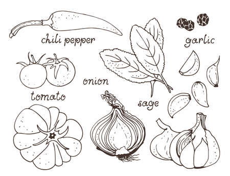 Vegetable, herb vector set, hand drawn collection: chili pepper, tomato, onion, garlic, sage, peppercorns with text isolated on white background