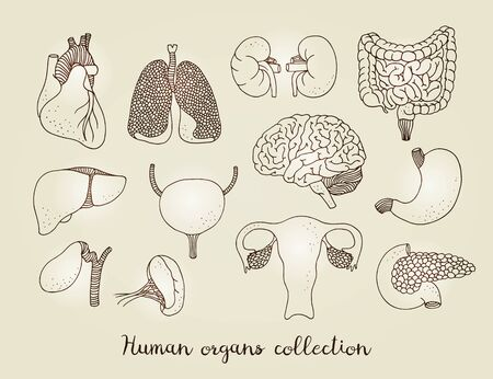 Hand drawn set of human internal organs, vector anatomy collection isolated on beige background Stock Illustratie