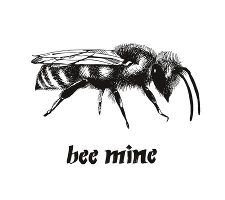 Be mine Valentine card, honey bee color vector illustration in engraving style isolated on white background Banque d'images - 129920530