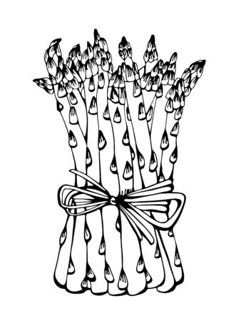 Dessin vectoriel d'asperges, illustration dessinée à la main isolée sur fond blanc