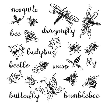 Insects doodle set, vector collection isolated on white background