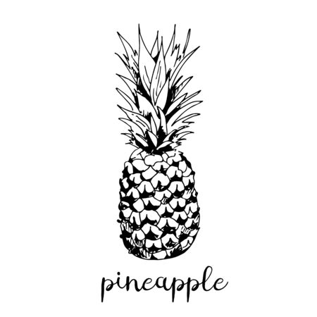 Pineapple vector illustration isolated on white background Ilustração