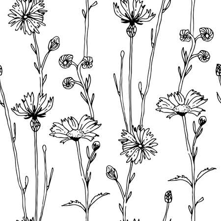 Herbs and flowers seamless vector pattern, isolated on white background