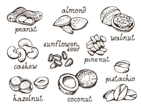 Nuts set vector set, various nuts hand drawn illustration, isolated on white background