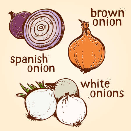 Onion vector set of hand drawn line art illustration, isolated on white background Illustration